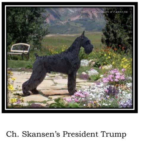 Skansens_President_Trump